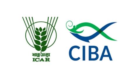CIBA Recruitment 2021